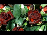 все розы для тебя ПРИНЦЕССА !!!!